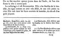 callitriche_Plinius_Buch-25_D.png