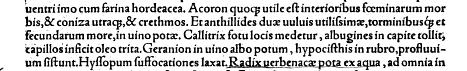 callitrix_Plinius_C.png