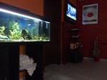 aquarium_night .jpg