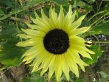 Gartenfotos 039.jpg