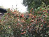 Gartenfotos 046.jpg
