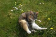 Frühling 2010 018.jpg