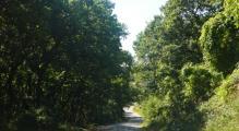 schwarzwald3.jpg