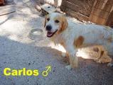 Carlos2.jpg