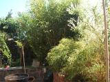 bambus3.jpg