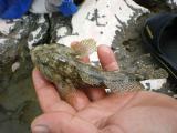 2.Meeresfisch.jpg