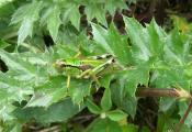 CIMG1429-1578 frage grün seitl gg AS.jpg