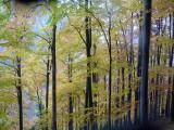 P1100751 Herbstwald.JPG