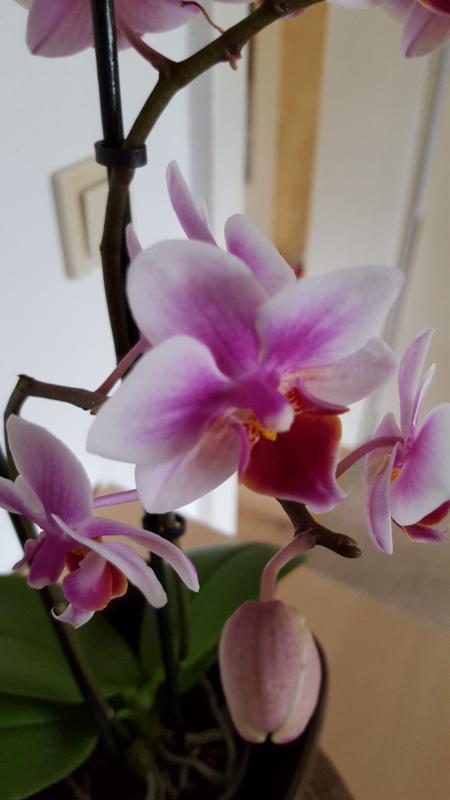 orchideen 2016 024.jpg