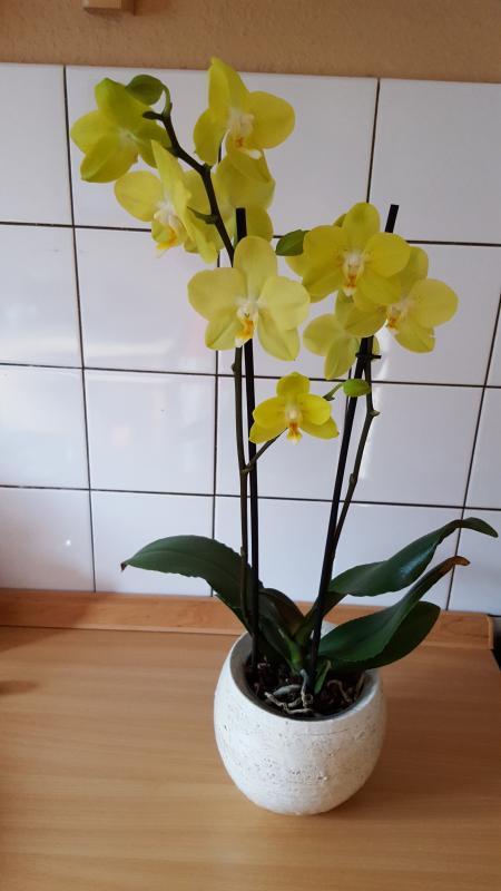 Orchideen 003.jpg