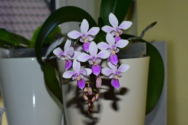 Orchideen 3 (fortlaufende Seiten 300 bis 400) - Seite 30 Pictures_u23197_ZScwtIUe