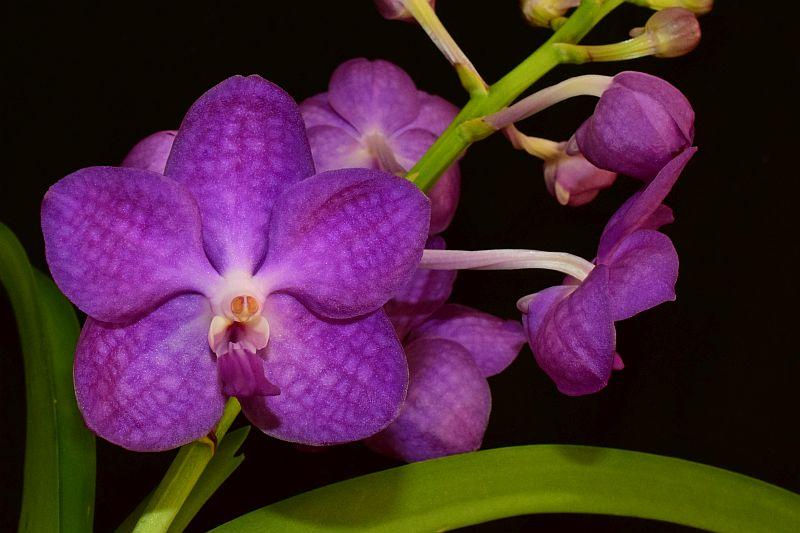 Orchideen 3 (fortlaufende Seiten 300 bis 400) - Seite 31 Pictures_u23715_UZKzBGjM