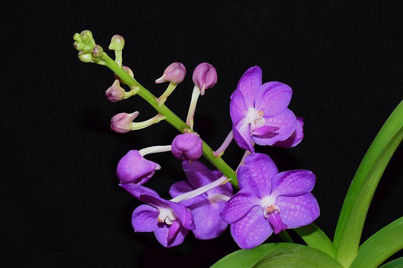 Orchideen 3 (fortlaufende Seiten 300 bis 400) - Seite 31 Pictures_u23716_ntsWRIzl