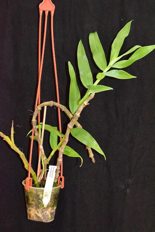 Orchideen-Neuzugang 2 - Seite 6 Pictures_u23730_GOjHxsiL
