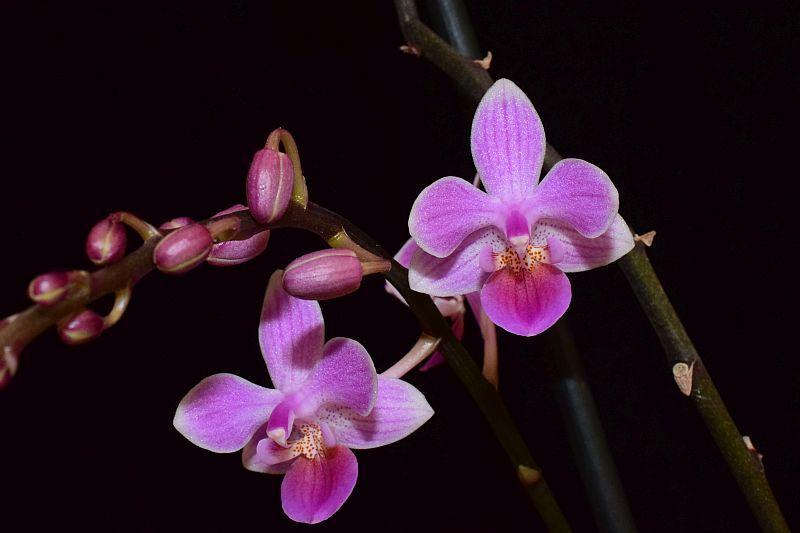 Orchideen 3 (fortlaufende Seiten 300 bis 400) - Seite 31 Pictures_u24077_ITlCjKOe