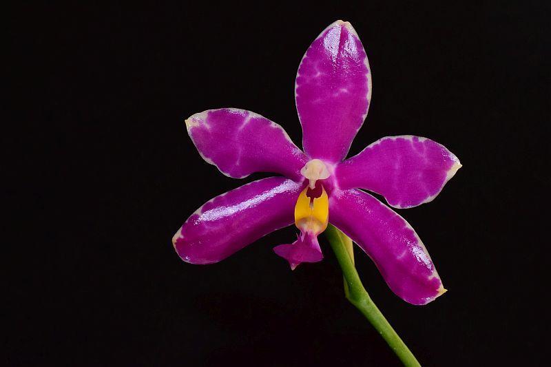 Orchideen 3 (fortlaufende Seiten 300 bis 400) - Seite 31 Pictures_u24081_yqBDOrkl