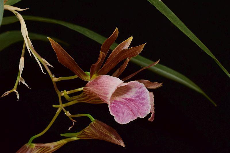 Orchideen 3 (fortlaufende Seiten 300 bis 400) - Seite 31 Pictures_u24086_gVjxhBOZ