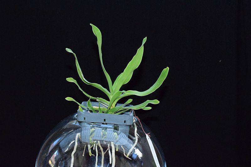 Orchideen-Neuzugang 2 - Seite 10 Pictures_u25192_dlEpRjWB