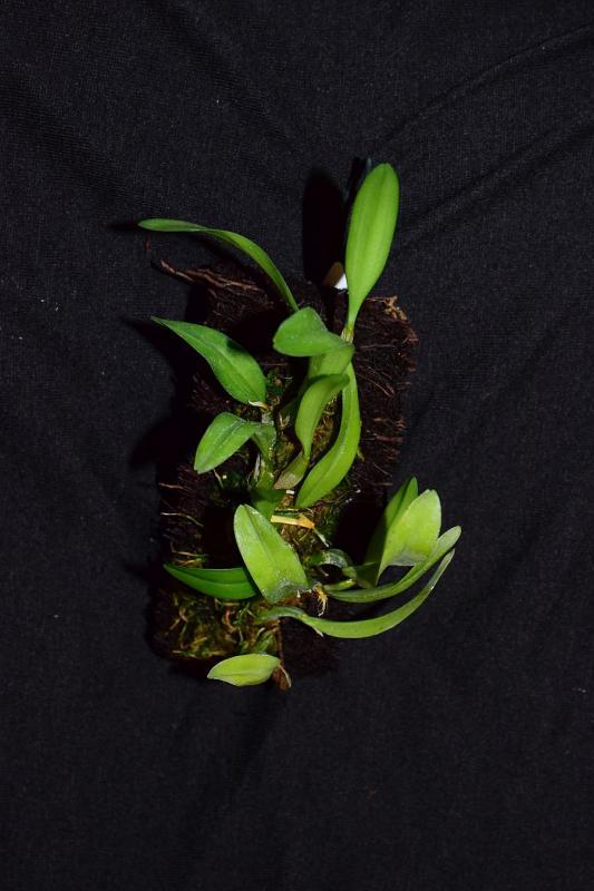 Orchideen-Neuzugang 2 - Seite 10 Pictures_u25196_rDTwbxXp