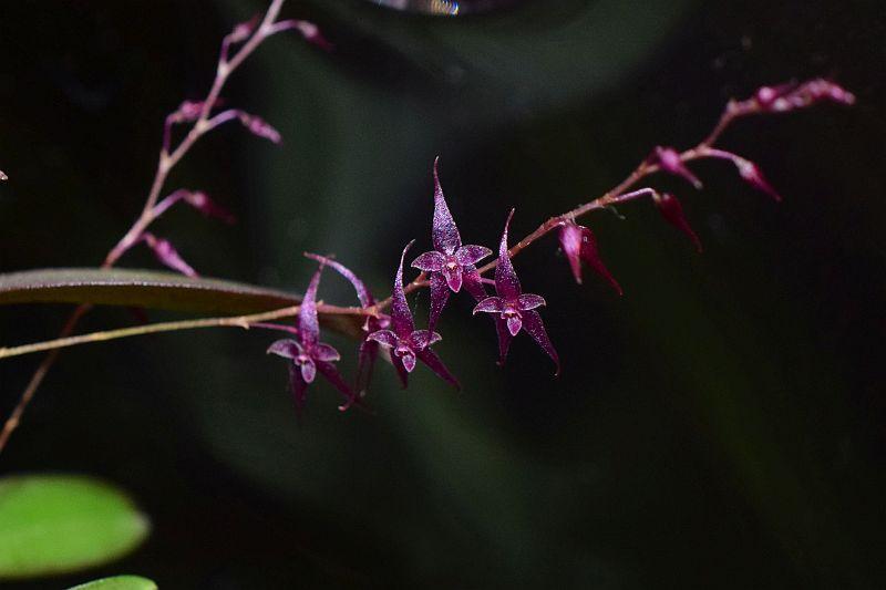 Miniatur-Orchideen Teil 5 Pictures_u28399_tOdAGRUH