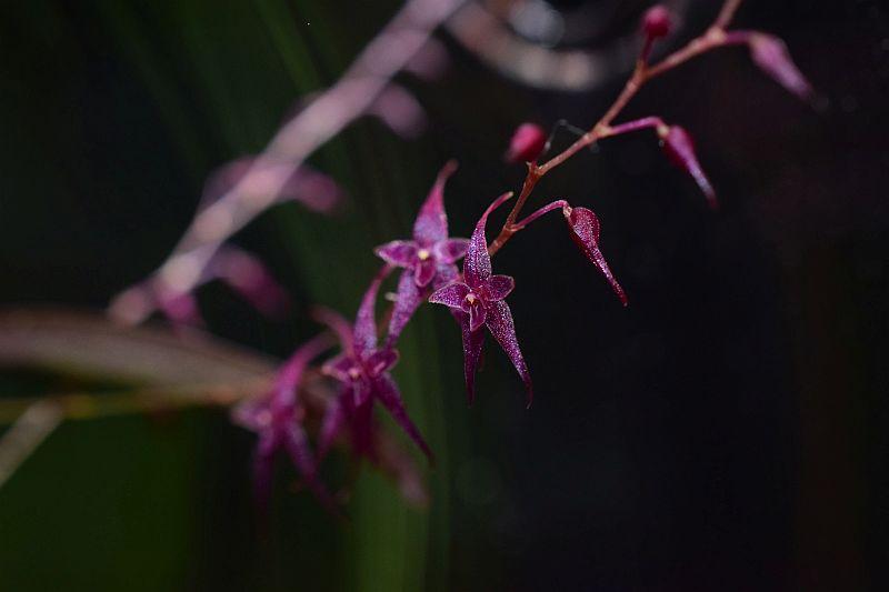 Miniatur-Orchideen Teil 5 Pictures_u28400_RyuQEFWC