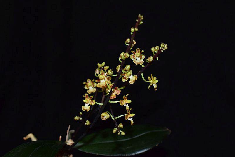 Orchideen 3 (fortlaufende Seiten 300 bis 400) - Seite 57 Pictures_u29080_SBUqiTRo