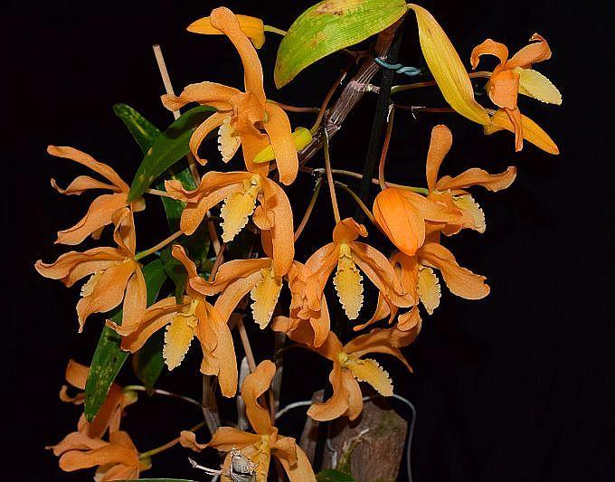 Orchideen 3 (fortlaufende Seiten 300 bis 400) - Seite 57 Pictures_u29084_GBEOsLwd