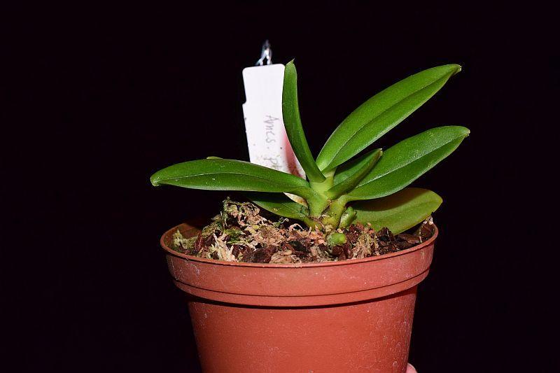 Orchideen-Neuzugang 2 - Seite 25 Pictures_u32777_zXKJGvtN