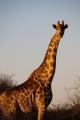 Botswana 2011-0064.jpg