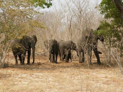 k-Afrikanischer Elefanten-DSC07822.JPG