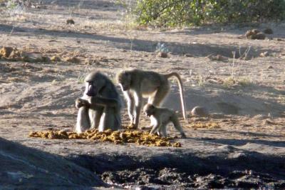 Botswana 2011-2796.jpg
