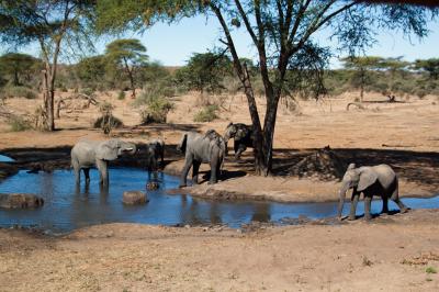 Botswana 2011-2486.jpg