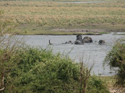 k-Afrikanischer Elefant-DSC07678.JPG