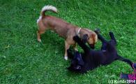 Fino und Barnie 26.07.14 (2).jpg
