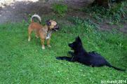 Fino und Barnie 26.07.14 (5).jpg