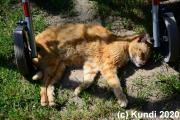 Katzenidylle 31.05.20 daheim (1) .JPG