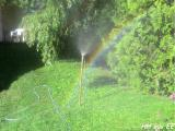 Regenbogensprenger.JPG