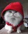 little-red-cat.jpg