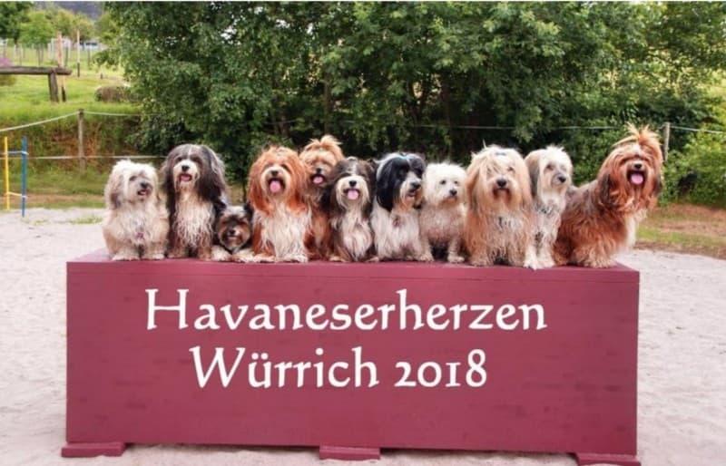 Havaneser Treffen 2018