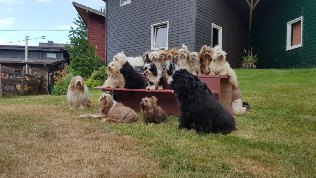 Unsere Hunde aus dem Havi Forum beim Treffen 2019